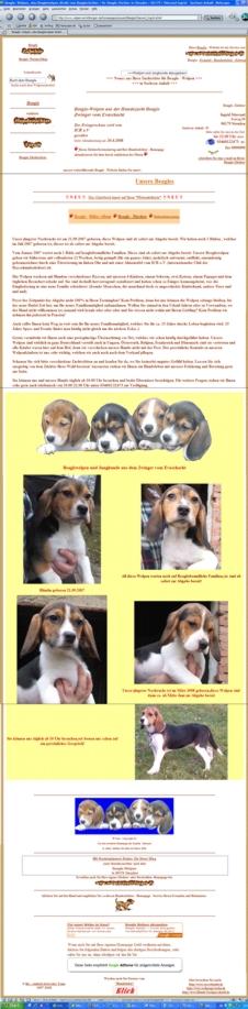 Beagle: Hundezüchter - Exquisit - Homepage bei rassehunde.de durch Anklicken finden Sie ein Beispiel